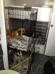 PARTNERS! Canines Shelter Dogs